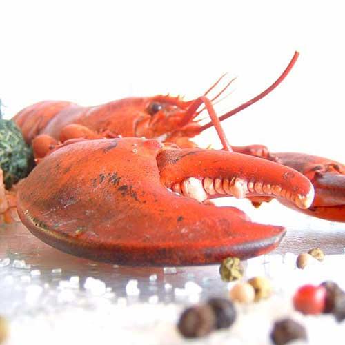 kochkurs hummer trifft tintenfisch